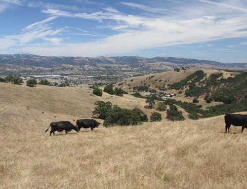 Tilton Ranch